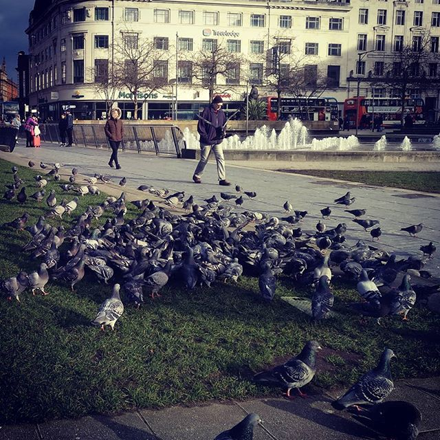 #pigeons #autohash #Manchester #UnitedKingdom #England #city #building #town #architecture #travel #traveling #visiting #instatravel #instago #tourism #urban #house #water #outdoors #cityscape #park #sight #old #sky #street #landscape #tourist #landmark #garden - from Instagram