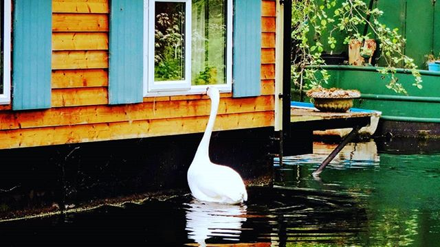 Knock, knock, anyone in? #autohash #Sheerwater #Woking #UnitedKingdom #England #house #water #nature #outdoors #architecture #summer #reflection #family #window #lake #travel #traveling #visiting #instatravel #instago #wood #bungalow #wooden #building #river #light #beautiful #swan - from Instagram
