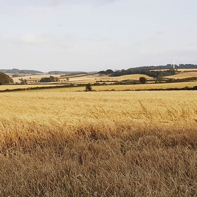 #autohash #UnitedKingdom #England #landscape #field #cropland #agriculture #sky #straw #farm #countryside #wheat #rural #nature #pasture #outdoors #hay #fall #crop #grass #country #soil - from Instagram