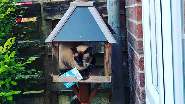 Don't over feed the birds 🤣 #autohash #UnitedKingdom #England #nature #animal #house #bird #summer #outdoors #hanging #family #cute #little #wood #wildlife #fence #old #window #wild #birdhouse #traditional #cat - from Instagram