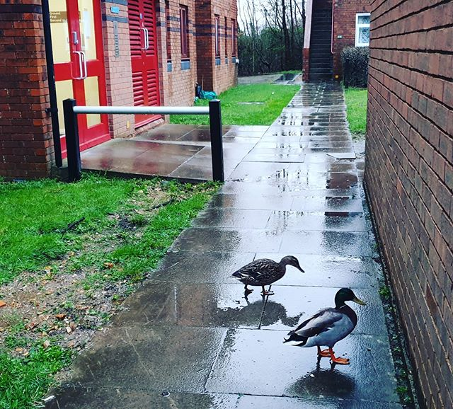 Quack quack #autohash #UnitedKingdom #England #water #pool #nature #canal #outdoors #grass #duck #fall #river #bird #bridge #garden #architecture #park #rain #rural #summer #old #travel #traveling #visiting #instatravel #instagood - from Instagram
